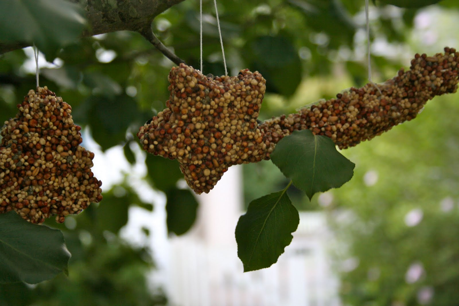 Bird Feeders–the Perfect Fall Project for Kids and Parents