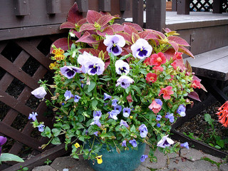 Best Flower Garden Groupings for Beautiful Combination Plantings