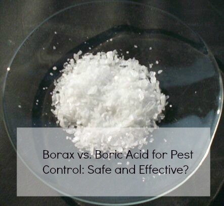 Borax Vs Boric Acid For Pest Control Safe And Effective Mom Prepares