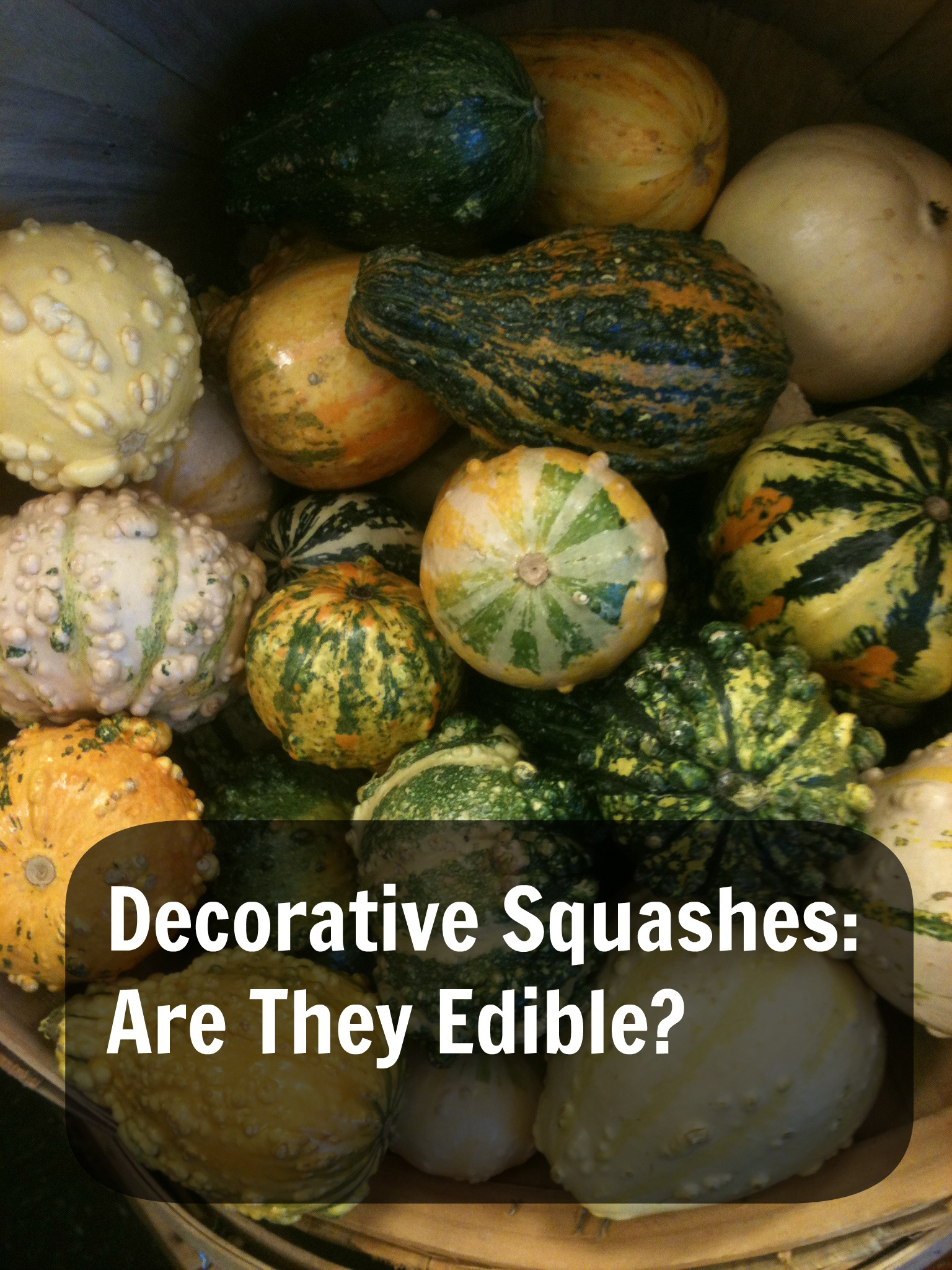 Decorative Squashes: Are They Edible?