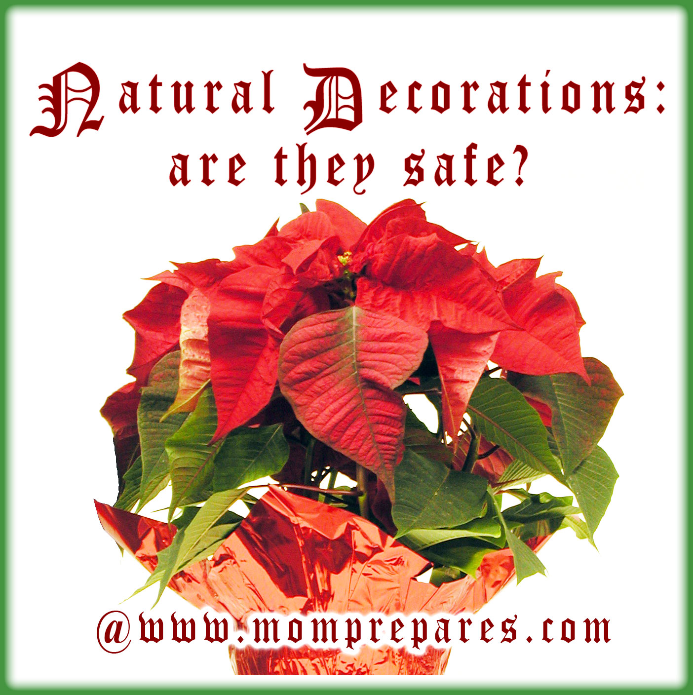 Are natural Christmas decorations safe? Original Image by Mikecco
