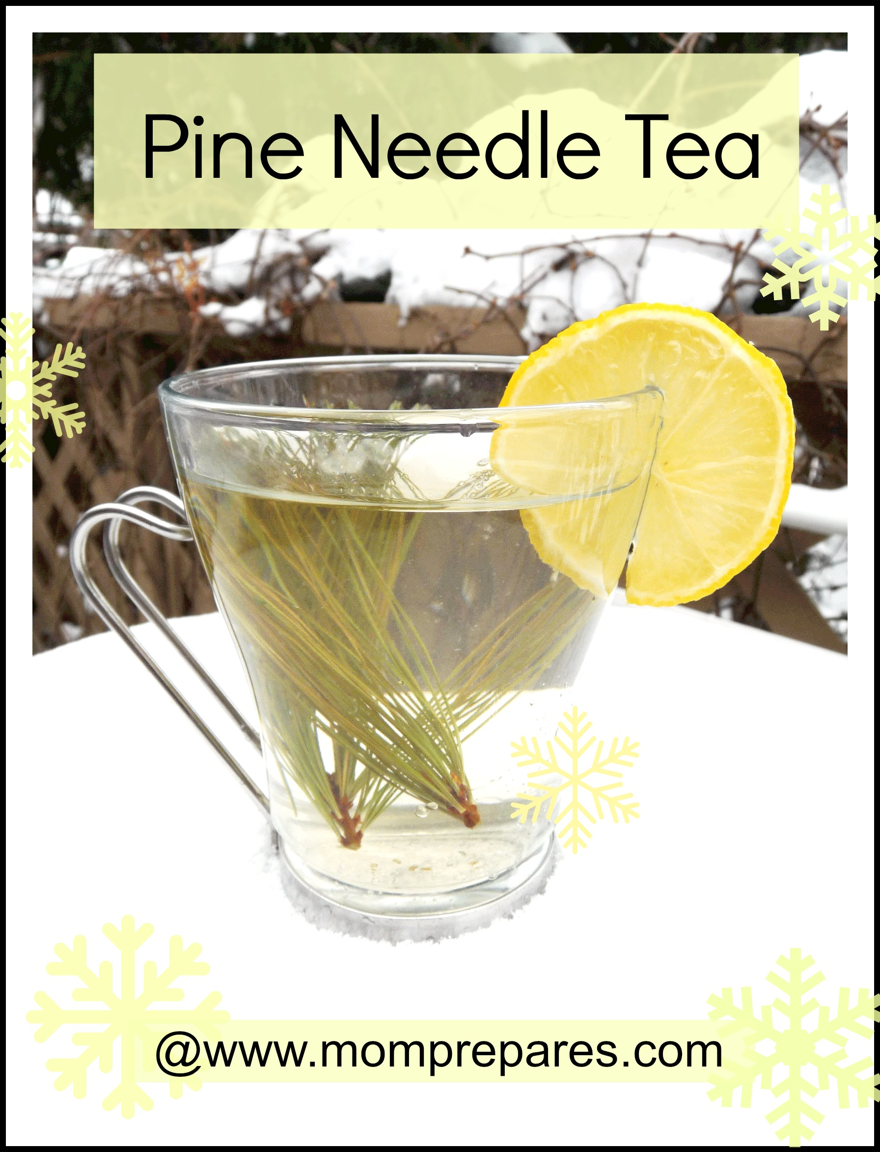 Pine tea is delicious and nutritious! Image courtesy of Karen Stephenson, cover design by MomPrepares