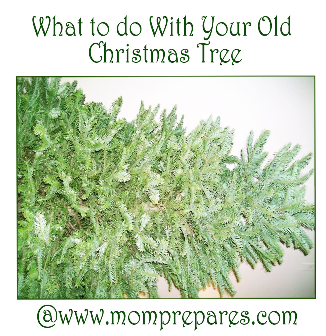 Don't let your Christmas tree go to waste after Christmas this year. Photo by Brenda Priddy