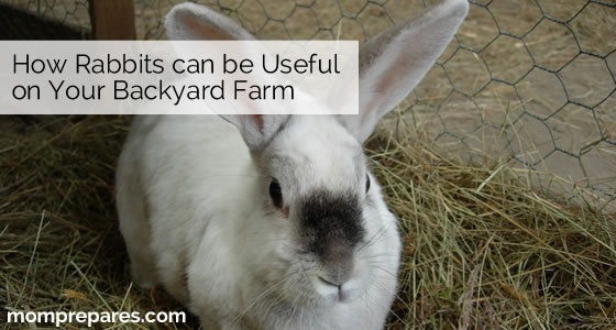 How a Rabbit can be Useful on Your Backyard Farm