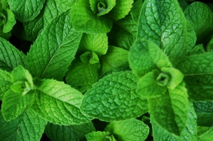 Mint is a wonderful addition to any garden plot. Photo: Skippy3E / CC by 2.0