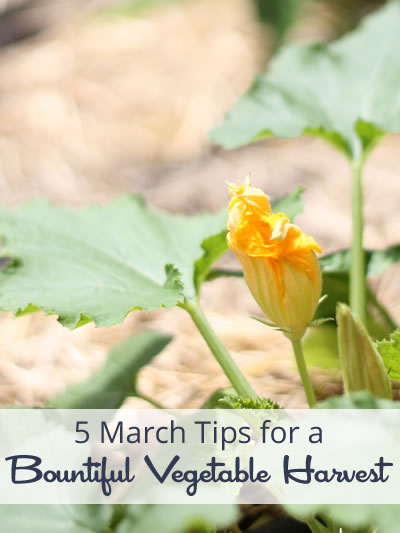 5 March Tips for a Bountiful Vegetable Harvest. Image Credit Erica Mueller