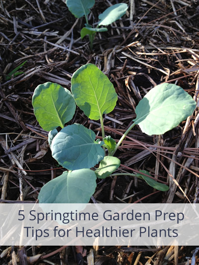 5 Springtime Garden Tips for Healthier Plants