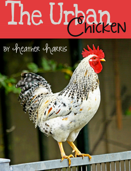 Heather shows you just how easy it is to raise chickens in your backyard! Book Cover Image used with permission.