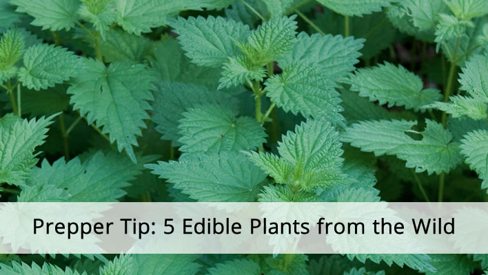 Prepper Tip: 5 Edible Plants