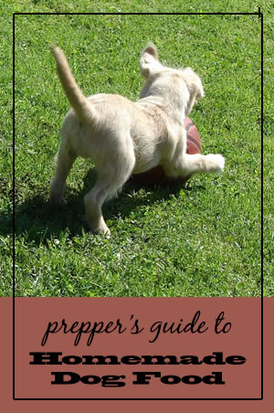 Guide to Homemade Dogfood