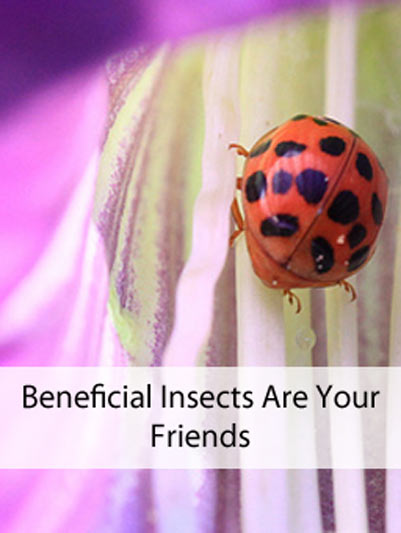Beneficial Insects Are Your Friends