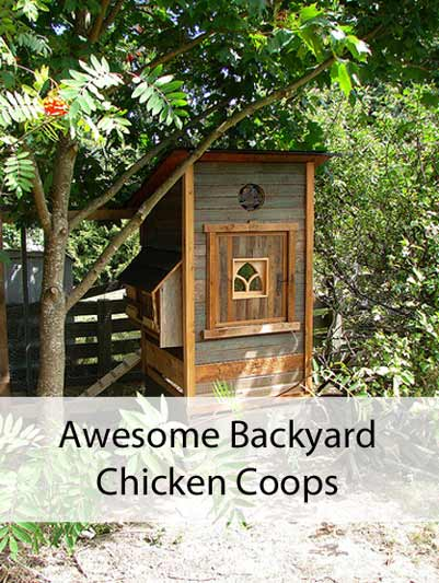 A cozy little coop for just a few chickens. Flickr photo by lord marmalade
