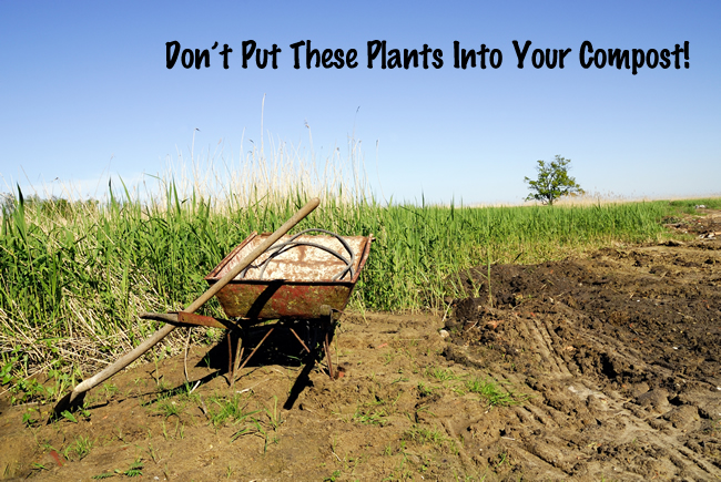 Do Not Put these Plants into Your Compost