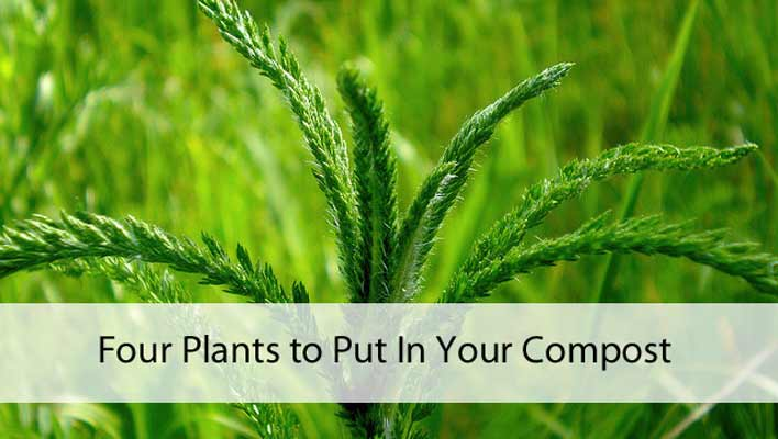 Four Plants to Put In Your Compost
