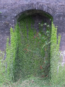 Ivy is pretty, but it likes to take over the garden. Photo: oatsy40 / CC by 2.0