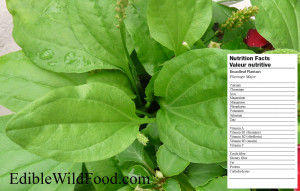 Nutrition Label: Plantain