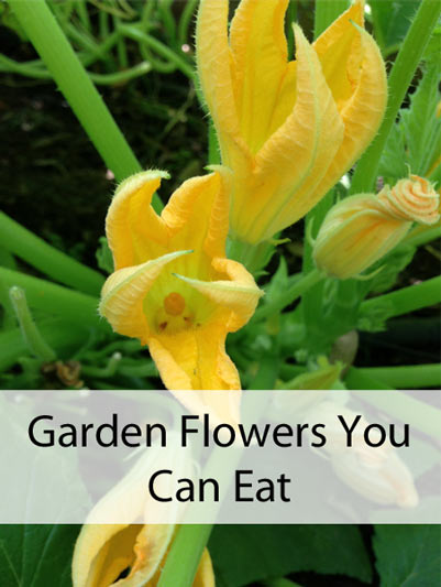 Garden Flowers You Can Eat