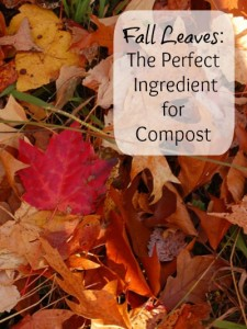 Fall Leaves: The Perfect Ingredient for Compost