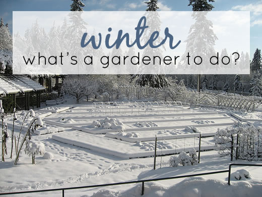 What Gardeners Do in Winter