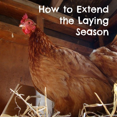 How to Extend the Laying Season