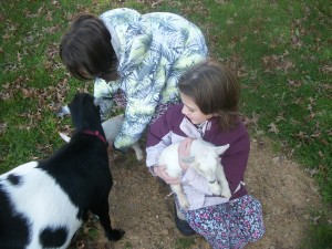 girls and goats