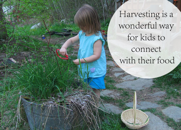 Harvesting is a Wonderful Way for Kids to Connect with Their Food