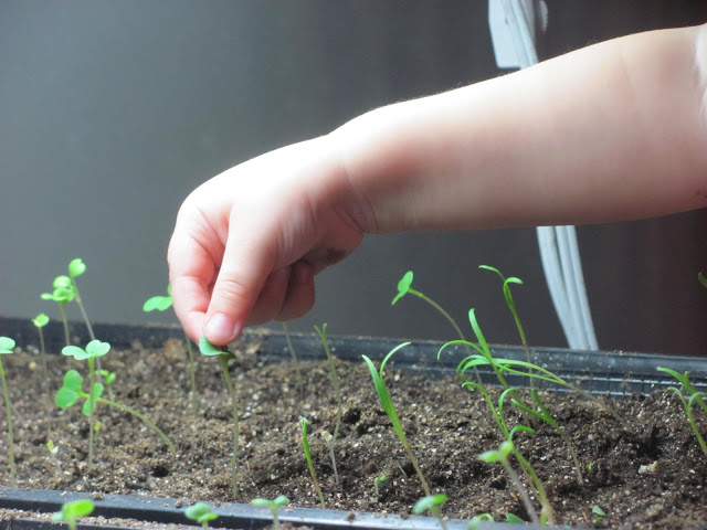 Kids Can Learn a Lot by Watching a Garden Grow