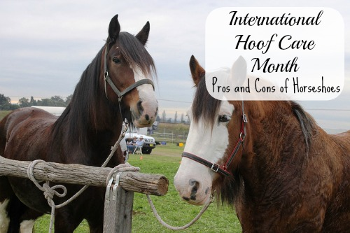 Hoof Care Month: Pros and Cons of Horseshoes – MomPrepares