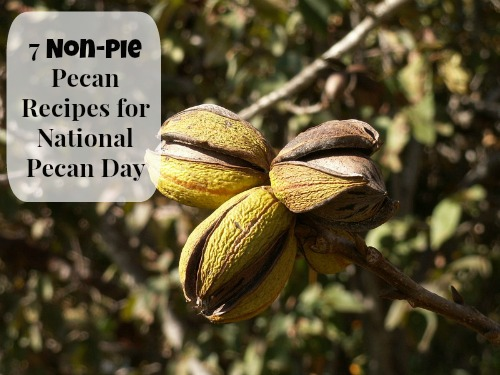 The lowly pecan has two special holidays. Photo by Dobbi
