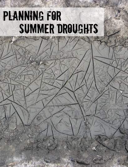 Avoid dry, parched soil this summer. Photo: bartoszjanusz / CC by 2.0