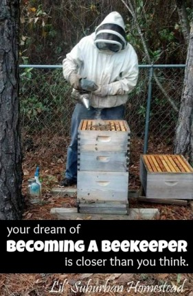 Your Dream of Becoming a Beekeeper is Closer than You Think