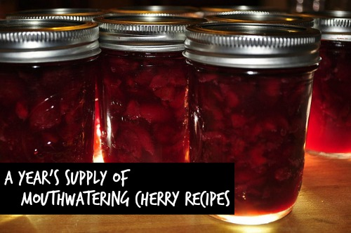 Cherry preserves make an excellent gift for yourself or others! Photo: jeffreyw / CC by 2.0