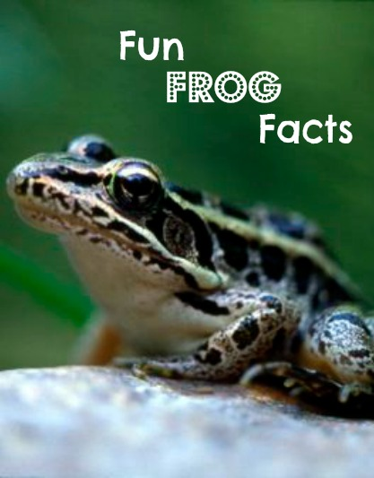 Frogs are amphibians you really should get to know! Photo by James Craig