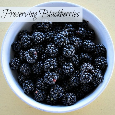 A bowl of blackberries ready for preserving. Flickr image by Stephen Rees