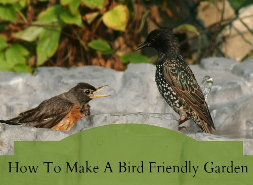 bird friendly garden
