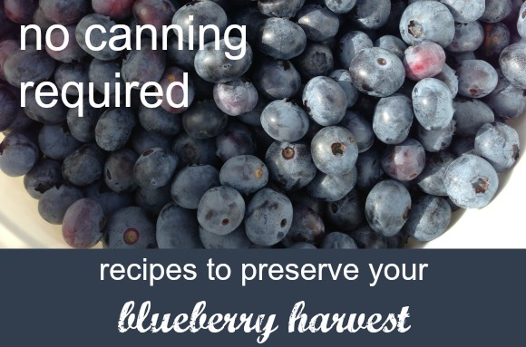 Recipes to Preserve Your Blueberry Harvest - No canning required