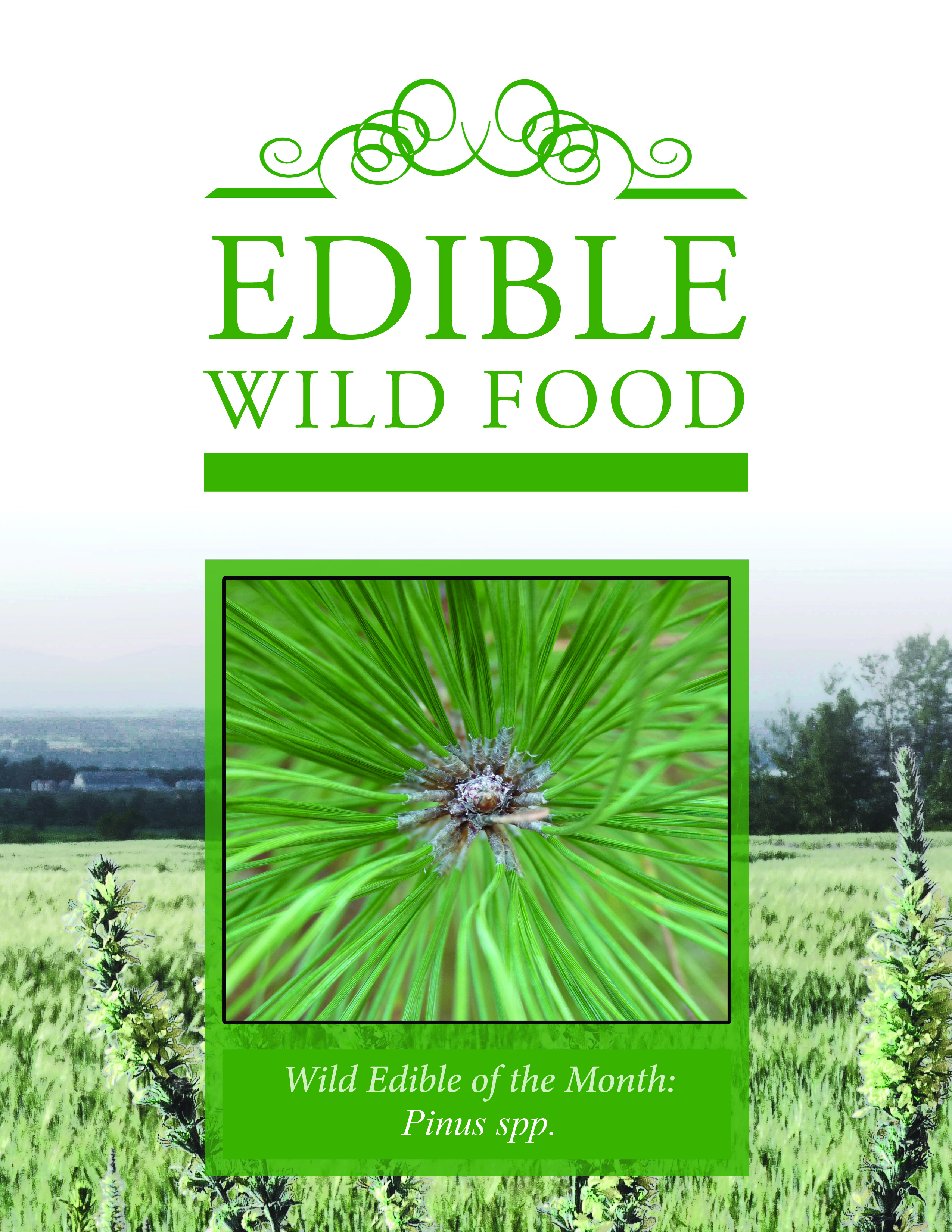 Edible Wild Food: Edible of the Month Subscription Review