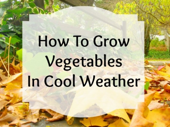 grow fall vegetables