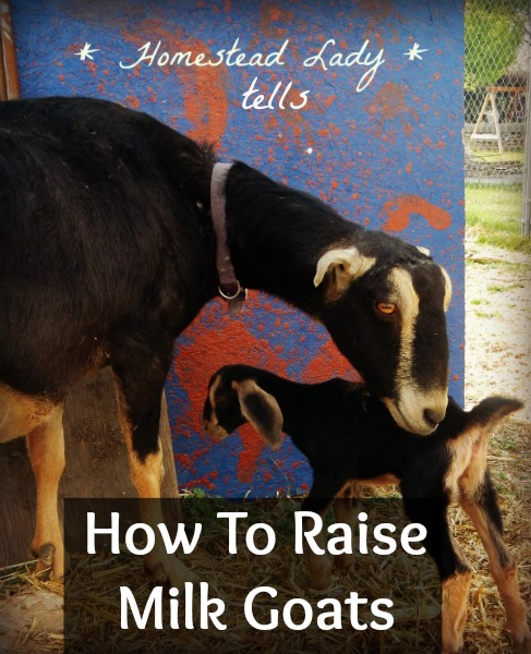 raise milk goats