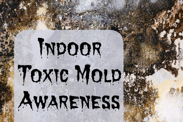 How to deal with toxic mold mom prepares - How to deal with mold ...