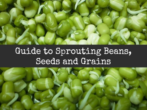 So Good for You: Sprouting makes simple seeds & beans into nutritional powerhouses that are rich in enzymes