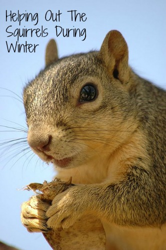 Helping Out The Squirrels During Winter