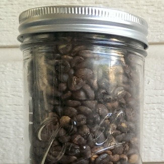 coffee beans at home