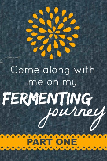 My Fermenting Journey, Part 1