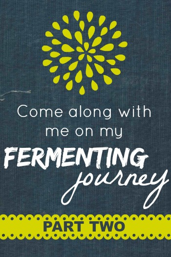 My Fermenting Journey, Part 2