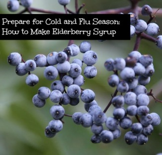 Prepare for Cold and Flu Season How to Make Elderberry Syrup