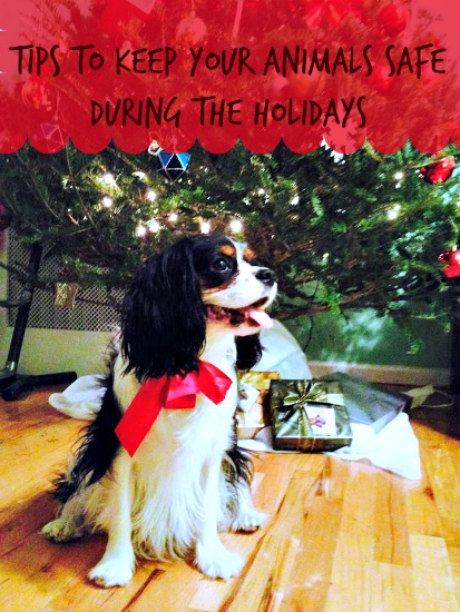 Practical Tips For Keeping Your Animals Safe During the Holidays