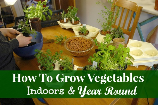 how to grow vegetables inside