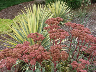 If you have these spiky landscaping plants, you can make yucca rope. Photo: Morguefile / CC by 2.0