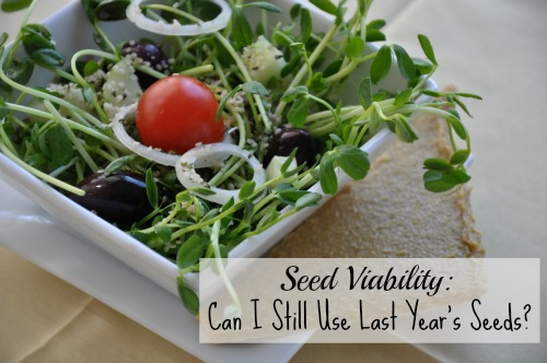 Seed Viability Can I Still Use Last Year's Seeds